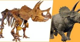 Yüzde 87si tamamlanan Triceratops fosili Melbournede sergileyecek
