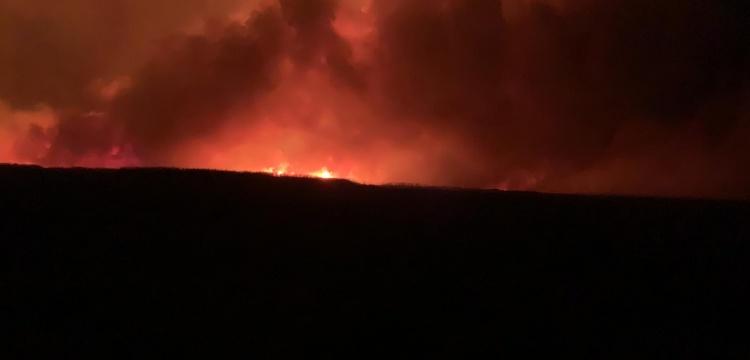 Eber Gölü'ndeki yangında 8 bin dekar kamışlık alan zarar gördü