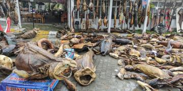 Türkiye Deniz Canlıları Müzesi Beylikdüzü Belediyesi tarafından yıkıldı