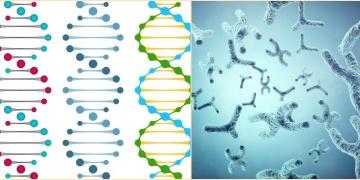Dünyada hayatın başlangıcına dair yeni teori: XNA