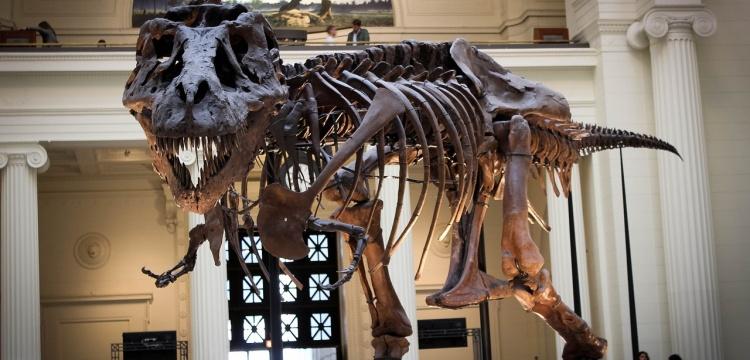 T-Rex'in zannedildiği kadar hızlı olmadığı ortaya çıktı
