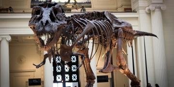T-Rexin zannedildiği kadar hızlı olmadığı ortaya çıktı