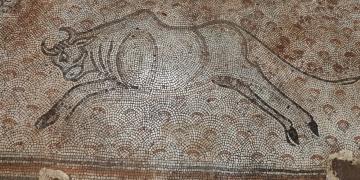 İslahiyede bulunan mozaikler Zeugma Mozaik Müzesine taşınıyor