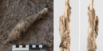 İranda bulunan 1600 Yıllık Koyun kalıntısının DNAsı incelendi