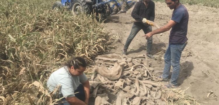 Kahramanmaraş'ta fil fosili bulundu